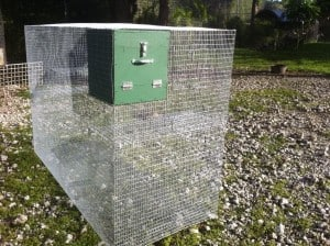Cages to care for your marmoset